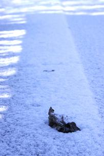 雪上の枯れ葉の素材 [FYI00419660]