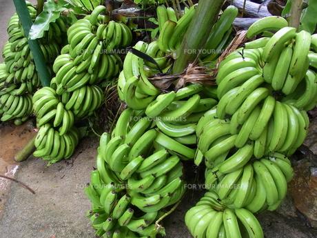 バナナの写真素材 [FYI00419675]