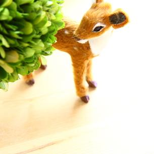 雑貨の子鹿の素材 [FYI00419717]