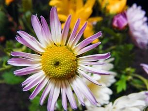 花のアップの写真素材 [FYI00420061]