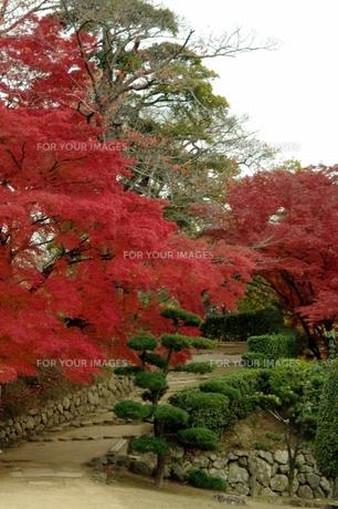 紅葉と緑に彩られた階段の写真素材 [FYI00420095]