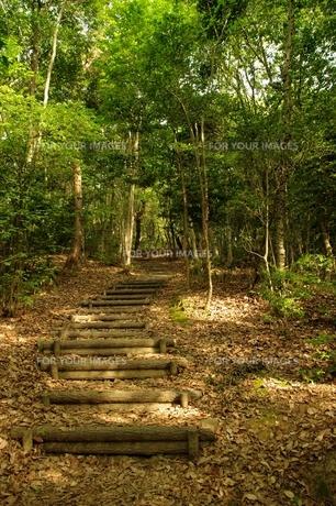 落ち葉の山道の写真素材 [FYI00420118]