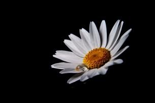 花と雫の写真素材 [FYI00420127]