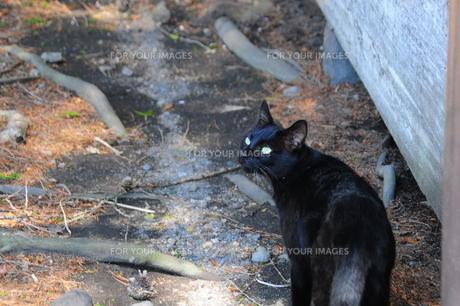 観光地の黒猫の写真素材 [FYI00420182]
