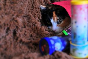三毛猫と万華鏡の写真の写真素材 [FYI00420222]