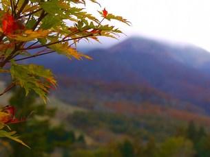 秋の写真素材 [FYI00420252]