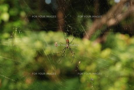 蜘蛛の写真素材 [FYI00420253]