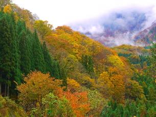 山の紅葉の写真素材 [FYI00420280]