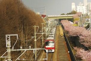電車とさくらの写真素材 [FYI00420281]