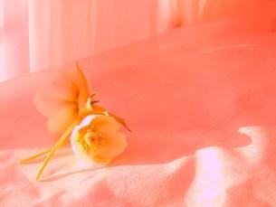 春の色の写真素材 [FYI00420293]