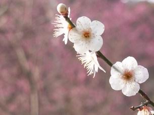 春の写真素材 [FYI00420321]