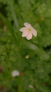 可憐な花の写真素材 [FYI00420349]