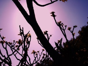 夕日をせにの写真素材 [FYI00420371]