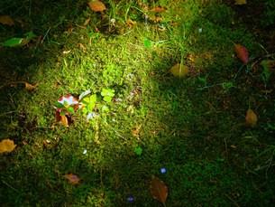 春の木漏れ日の写真素材 [FYI00420381]