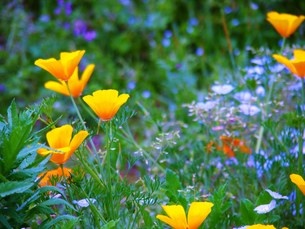 花の国の写真素材 [FYI00420387]