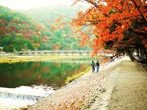 嵐山の紅葉の写真素材 [FYI00420397]