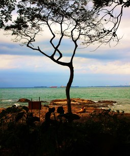 海と一本の木の写真素材 [FYI00420453]