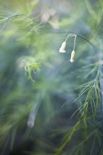 ふた雫の花の写真素材 [FYI00420588]