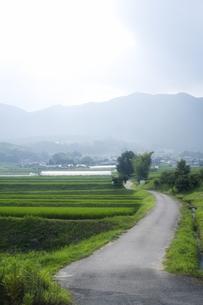 田舎の道と太陽光の写真素材 [FYI00420589]