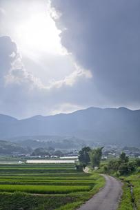 田舎の道と太陽光の写真素材 [FYI00420598]