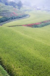稲作風景の写真素材 [FYI00420608]