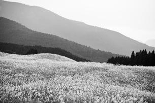 グレースケールの丘の写真素材 [FYI00420617]