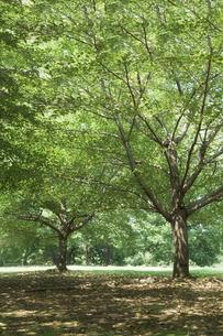 緑の木の写真素材 [FYI00420619]