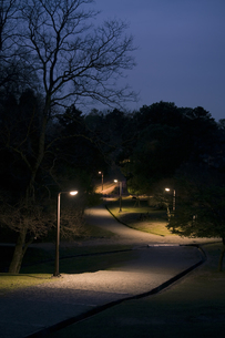 街灯の路の写真素材 [FYI00420630]