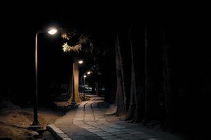 夜の歩道の写真素材 [FYI00420634]