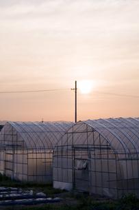 ビニールハウスと夕日の写真素材 [FYI00420654]