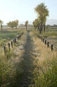 草原の道の写真素材 [FYI00420665]
