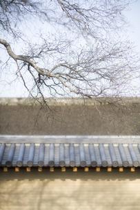 枝と瓦屋根の土壁の写真素材 [FYI00420666]