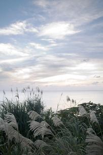 ススキとの海の写真素材 [FYI00420667]