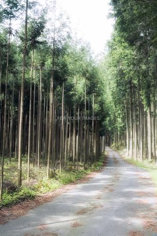 杉林の林道の素材 [FYI00420672]