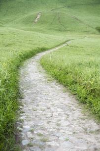 緑の高原の道の写真素材 [FYI00420673]