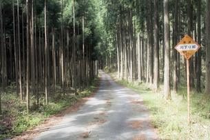 杉林の林道の素材 [FYI00420677]