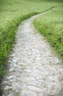 緑の高原の道の写真素材 [FYI00420678]
