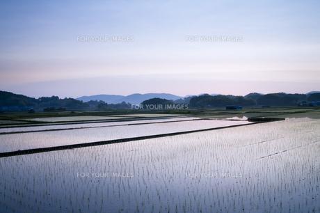 水田とブルーアワーの素材 [FYI00420691]