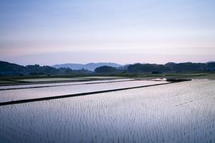 水田とブルーアワーの写真素材 [FYI00420691]