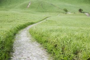 緑の高原の道の写真素材 [FYI00420692]