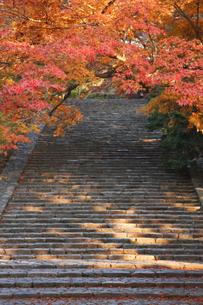 モミジと階段の写真素材 [FYI00420693]