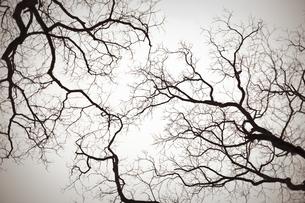 branchesの素材 [FYI00420706]