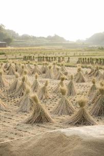 稲刈り後の風景の写真素材 [FYI00420748]