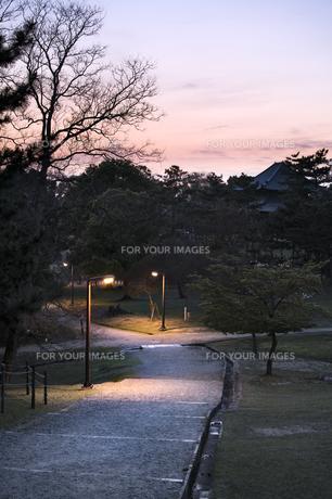 奈良公園の日没の素材 [FYI00420786]
