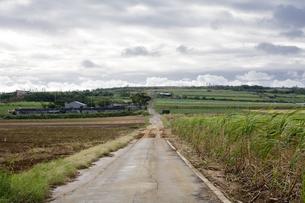 地平線へ続く道の素材 [FYI00420787]