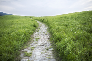 緑の高原路の素材 [FYI00420792]