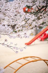 桜の街区公園の写真素材 [FYI00420800]