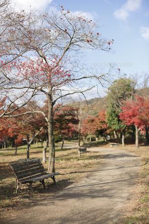 秋の遊歩道の素材 [FYI00420819]