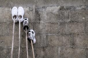 運動靴の洗濯の写真素材 [FYI00420826]