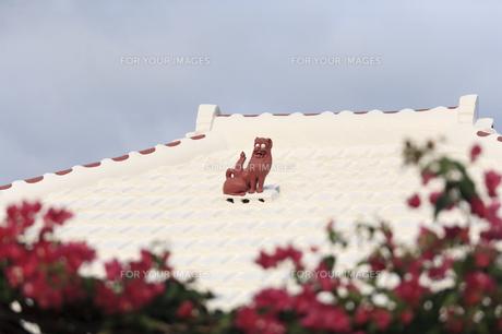 沖縄の屋根シーサーの写真素材 [FYI00420829]